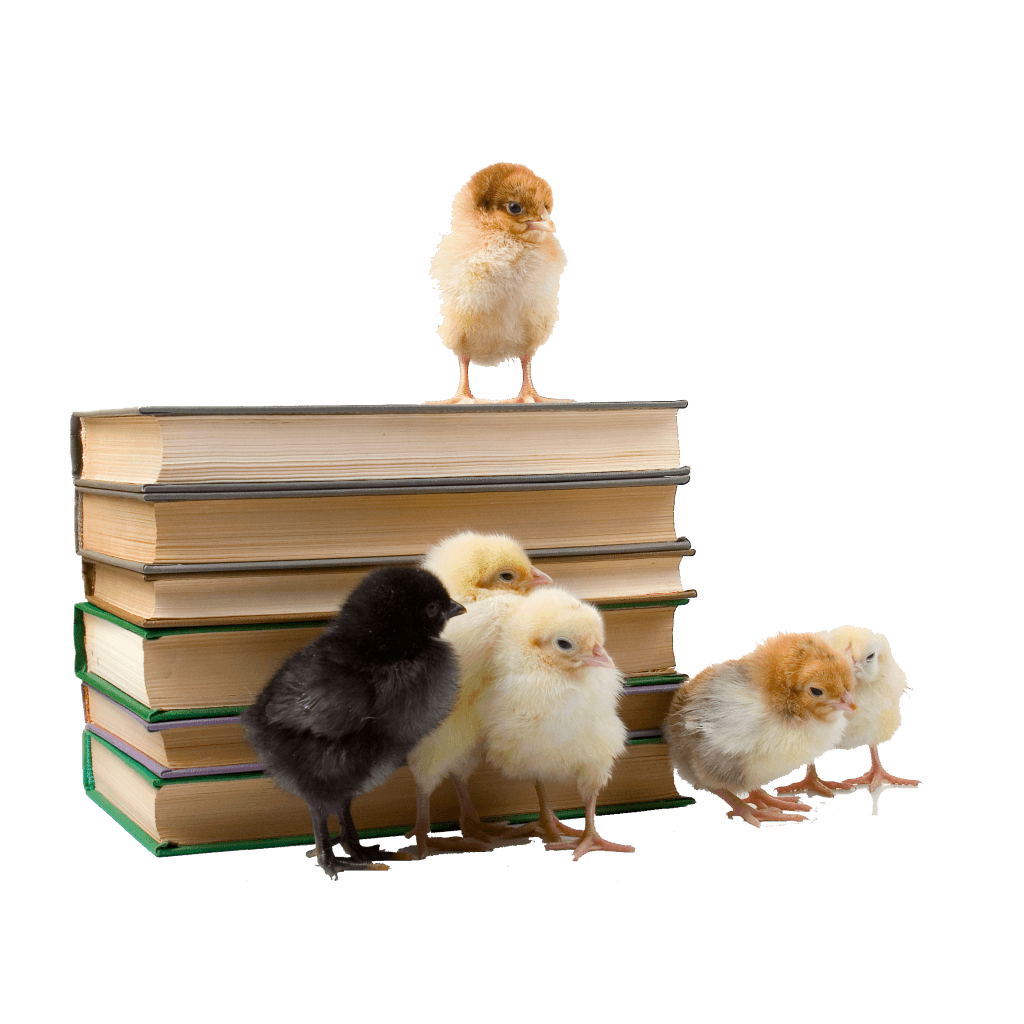 Baby chicks with books