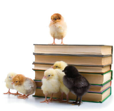 baby chicks and books-01