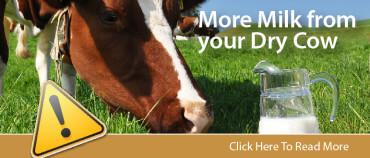 dry cow promo-01