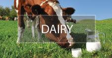 Dairy-01