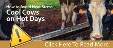 Heat Stress Dairy Promo-01
