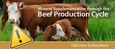 Beef Mineral Promo-01