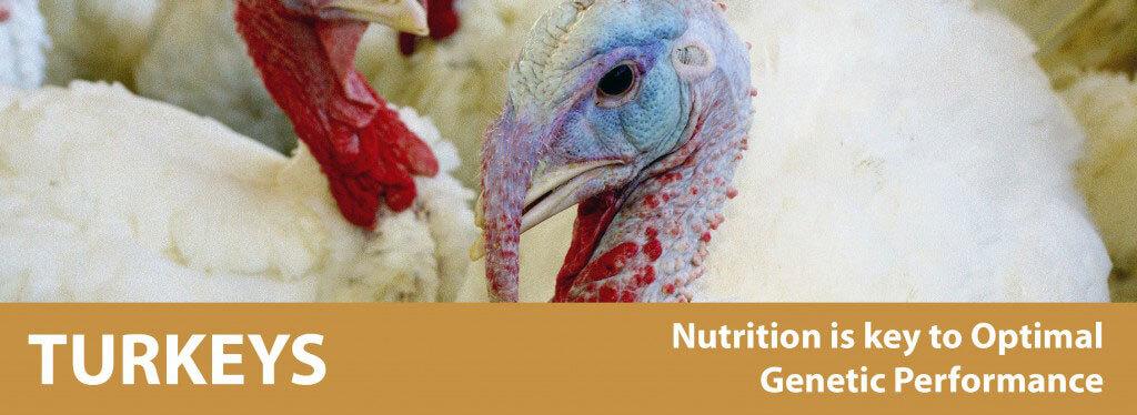 turkey banner-01