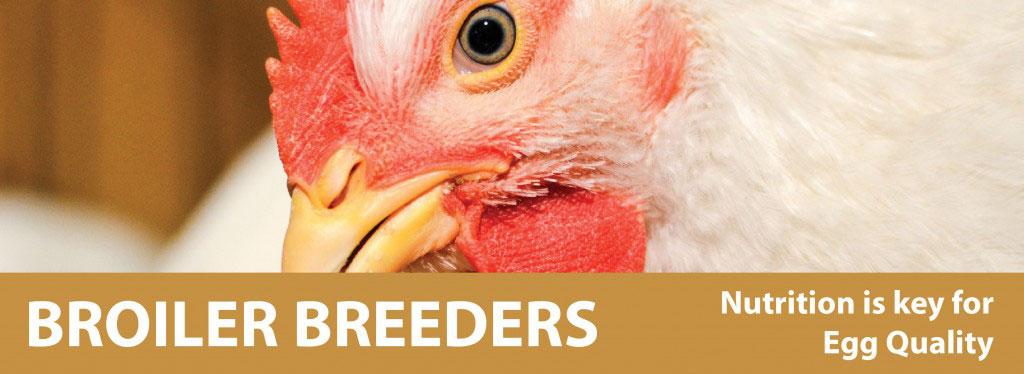 broiler breeder banner-01