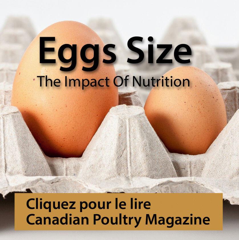 egg size promo - fre-01