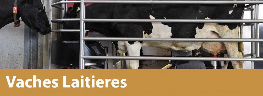 vaches-laiteier - banner-01