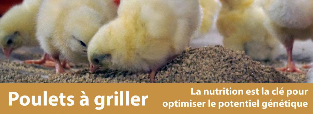poulets a griller banner.fr-01